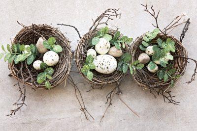 natürliche Vogelnester mit Eiern