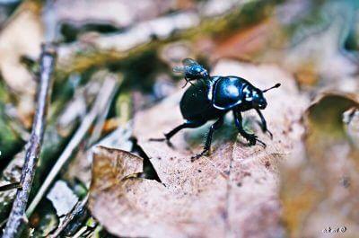 Käfer mit Mücke von EckArt