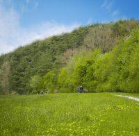 Wald, Wiese, Menschen, 1. Mai Wanderung
