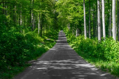 Wald, Waldweg, Waldspaziergang